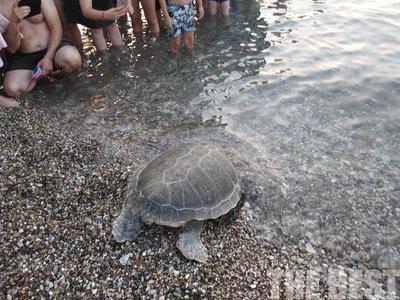 Δυτική Ελλάδα: Η επιστροφή μιας χελώνας καρέτα καρέτα στη θάλασσα, στην Πλάζ της Πάτρας (VIDEO)