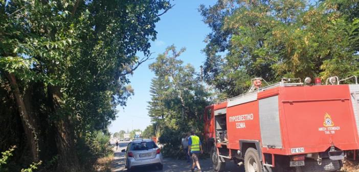 Μεσολόγγι: Παραλίγο τραγωδία από κλαδί στο Νεοχώρι! (ΔΕΙΤΕ ΦΩΤΟ)