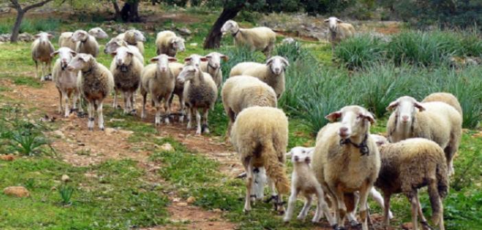 Ένωση Αγρινίου: Βιολογικά – Ανακοίνωση για τις πληρωμές