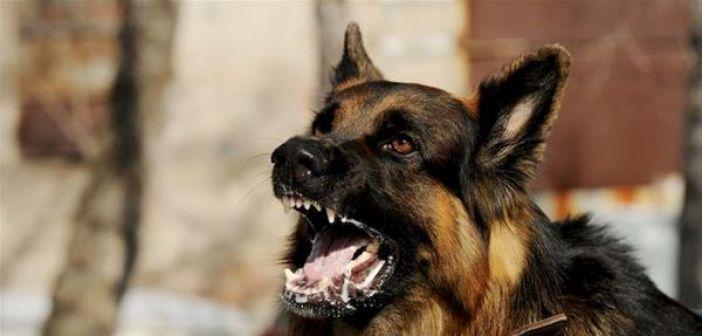 Σκύλος δάγκωσε 35χρονη στη Βόνιτσα
