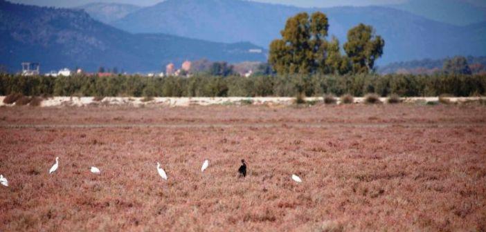 Ο Φορέας Διαχείρισης Λιμνοθάλασσας Μεσολογγίου – Ακαρνανικών Ορέων για τους Αγρότες σχετικά με την Προστασία της Ορνιθοπανίδας μέσω Επιδοτήσεων