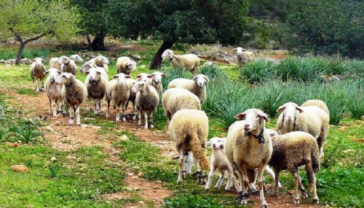 Δυτική Ελλάδα: Πίστωση ενισχύσεων σε δικαιούχους για βιολογικές δράσεις ζωικής παραγωγής