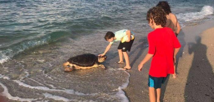 Λευκάδα: Μία ακόμη νεκρή χελώνα (ΦΩΤΟ)