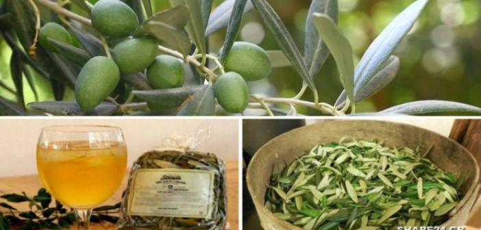 Επιμελητήριο Αιτωλοακαρνανίας: Ιαπωνική εταιρεία ζητά Έλληνα εξαγωγέα αποξηραμένων φύλλων ελιάς για ιχθυοτροφές