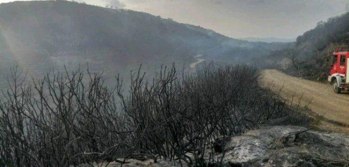 Αγρίνιο: Ο απολογισμός της μεγάλης φωτιάς στη Σκουτεσιάδα (ΔΕΙΤΕ ΦΩΤΟ)
