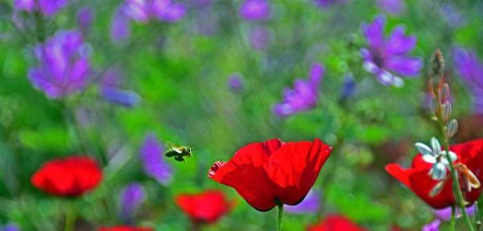 Καιρός σήμερα: «Μαλακώνει» το… φθινόπωρο και «επιστρέφει» το… καλοκαίρι!