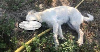 Δυτική Ελλάδα: Σύλλογος επικήρυξε με 1500 ευρώ τους δράστες που δηλητηρίασαν τρία σκυλιά