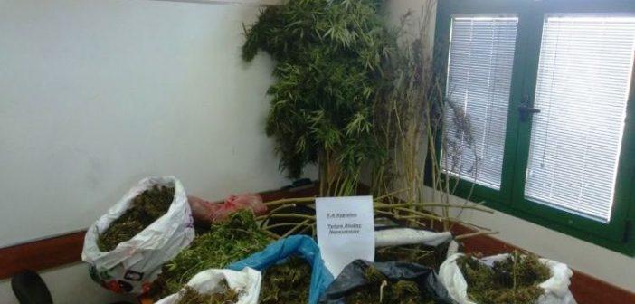 Παναιτώλιο: Επεισοδιακή επ΄ αυτοφώρω σύλληψη Αλβανού χασισοκαλλιεργητή (ΔΕΙΤΕ ΦΩΤΟ)