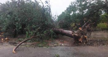 Δημοτικό Σχολείο Ματαράγκας: «Απαιτούμε δεν επαιτούμε την άμεση απομάκρυνση και κοπή των δέντρων» (ΔΕΙΤΕ ΦΩΤΟ)