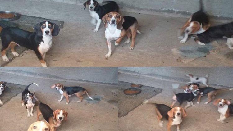 Καταγγελία – Ναύπακτος: Γυναίκα φυλάκισε θηλυκό σκυλί και «εκμεταλλεύεται» τα κουτάβια του