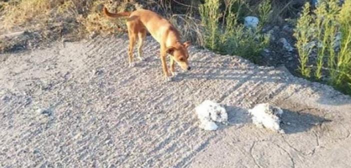 Χάθηκε σκυλίτσα στο Αγρίνιο (ΦΩΤΟ)