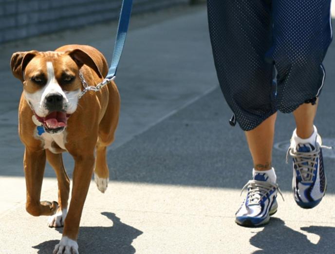 Δήμος Μεσολογγίου: Διαχείριση αδέσποτων και δεσποζόμενων ζώων συντροφιάς