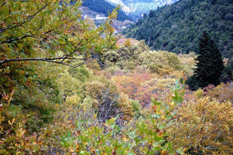 Τα χρώματα της φύσης στον δρόμο για του Προυσό (ΔΕΙΤΕ ΦΩΤΟ)