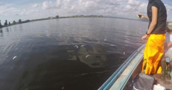 Παρατήρηση φαινομένου θνησιμότητας ιχθύων στη λιμνοθάλασσα Αιτωλικού από το ΕΛΚΕΘΕ και το ΦΔ/ΛΜ – ΑΟ (ΦΩΤΟ)