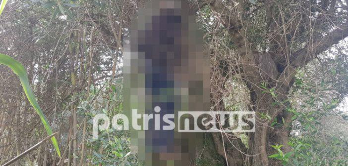 Δυτική Ελλάδα – Σοκ στον Πύργο: Άνδρας βρέθηκε κρεμασμένος σε δέντρο (ΦΩΤΟ)