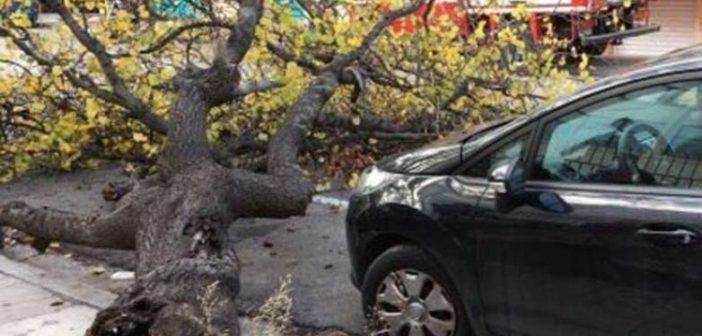 Δυτική Ελλάδα: Δένδρο έπεσε πάνω σε στάση λεωφορείου στην Πάτρα – Από θαύμα δεν υπήρξε τραυματισμός!