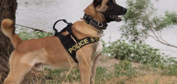"""Μεσολόγγι: Αστυνομικός σκύλος """"ξετρύπωσε"""" ηρωίνη σε οικία 36χρονου"""