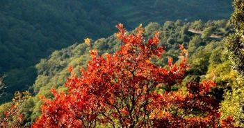 """Αράκυνθος: Το """"περιβόλι"""" των χρωμάτων (ΔΕΙΤΕ ΦΩΤΟ)"""
