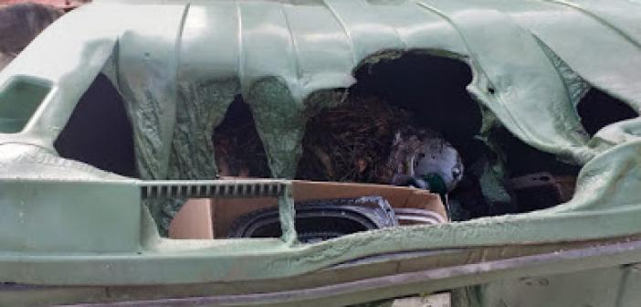 Καινούργιο: Προσοχή στις στάχτες από τζάκια και σόμπες, ζημίες σε πράσινο κάδο (ΔΕΙΤΕ ΦΩΤΟ)