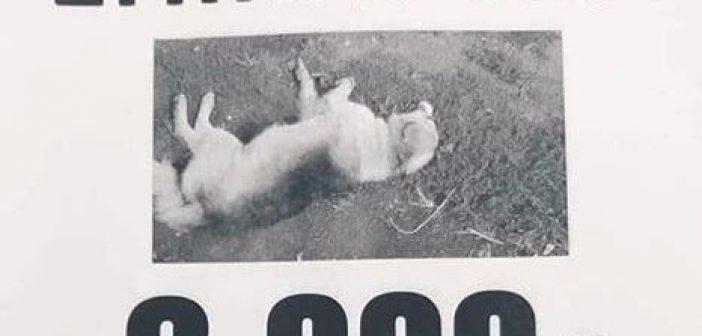 «Βροχή» από φόλες στην Αμφιλοχία: Επικήρυξε με 2.000 ευρώ το δράστη που σκότωσε τον σκύλο του! (ΦΩΤΟ)