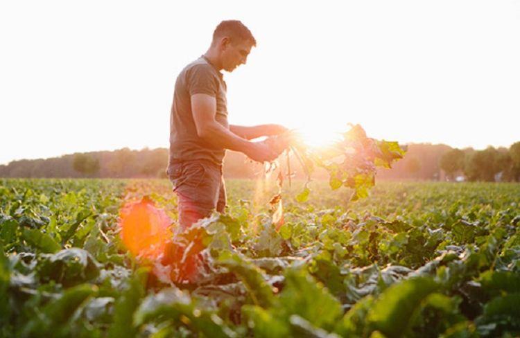 Τράπεζα Πειραιώς: Πληρωμές των αγροτικών επιδοτήσεων σε δικαιούχους αγρότες