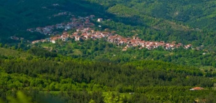 Σε αυτό το ελληνικό χωριό παράγεται το 70% των χριστουγεννιάτικων δέντρων – Εκπληκτικό ελατοχώρι
