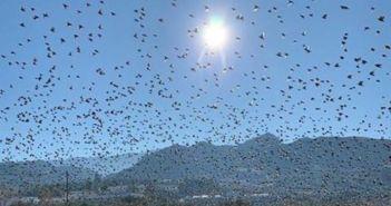 Το εντυπωσιακό θέαμα με τα πουλιά που μεταναστεύουν από το Ρίο (ΦΩΤΟ + VIDEO)
