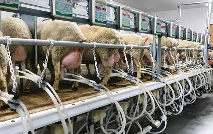 Ένωση Αγρινίου: Ολοκληρωμένη υποστήριξη για τις Δηλώσεις Παράδοσης Γάλακτος