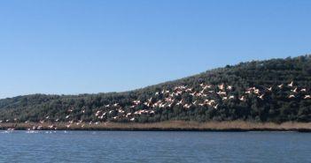 Δικτύωση του Φορέα Διαχείρισης Λιμνοθάλασσας Μεσολογγίου – Ακαρνανικών Ορέων με το Φορέα Διαχείρισης Αμβρακικού Κόλπου – Λευκάδας για τις Χειμερινές Καταμετρήσεις Υδρόβιων Πουλιών 2020