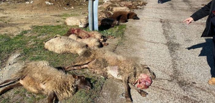 Mεσολόγγι: Σοκαριστικό τροχαίο στη Φοινικιά – Αγροτικό παρέσυρε κοπάδι με πρόβατα (ΣΚΛΗΡΕΣ ΦΩΤΟ)
