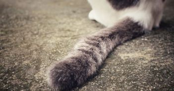 Μεσολόγγι: Πέταξαν σκοτωμένη γάτα με τα πόδια δεμένα (ΔΕΙΤΕ ΦΩΤΟ)