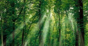 Ο Διευθυντής Δασών Αιτωλοακαρνανίας Νικήτας Μάζης για την Παγκόσμια Ημέρα Δασοπονίας