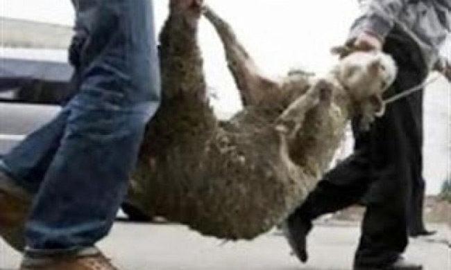 Ξηρόμερο: Ζωοκλέφτες πήραν από κτηνοτροφική μονάδα 20 πρόβατα