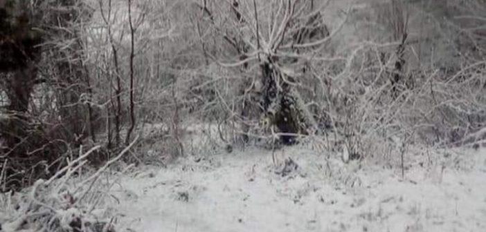 Meteo: Στο 10% η χιονοκάλυψη τον Απρίλιο στην Ελλάδα, η μεγαλύτερη της τελευταίας 15ετίας