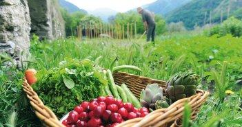Κατατέθηκε η τροπολογία για την απασχόληση ανέργων σε αγροτικές εκμεταλλεύσεις
