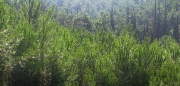 Αιτωλοακαρνανία: Πως θα επηρεάσει η κλιματική αλλαγή γεωργία, δάση, ποτάμια και υδάτινους πόρους