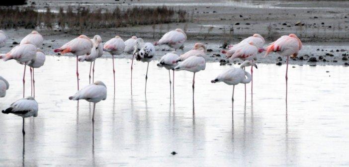 Εικόνες από τους βιοτόπους της λιμνοθάλασσας Μεσολογγίου