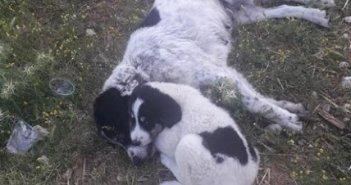 Φόλες ασυνείδητων σε δυο σκυλιά στο Μοναστηράκι (ΦΩΤΟ)