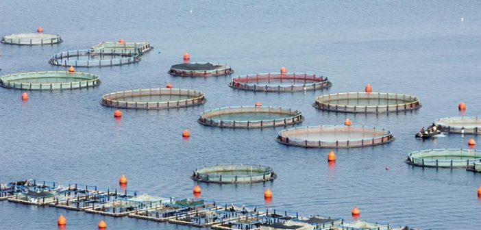 Ανοίγει ο δρόμος για νέες επενδύσεις στην Υδατοκαλλιέργεια