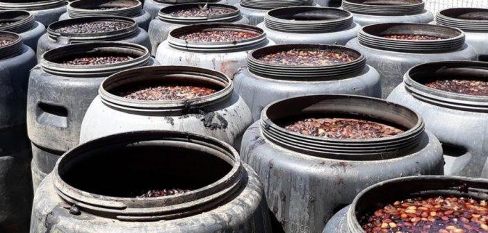 Αιτωλικό: Απούλητη παραμένει η ελιά