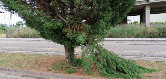 «Υποφέρουν» τα δένδρα στη λαϊκή του Σαββάτου (ΦΩΤΟ)