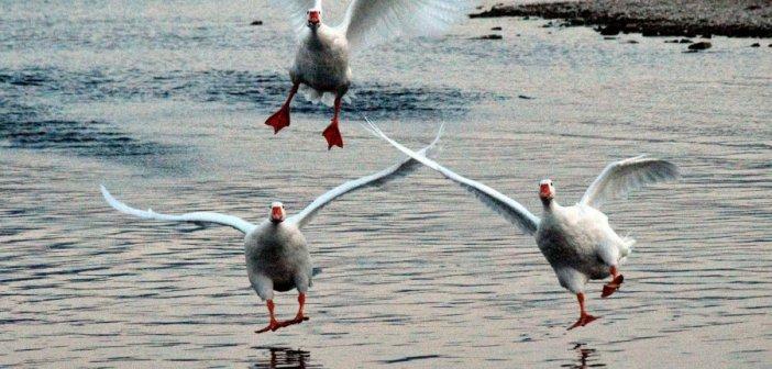 Καλημέρα με όμορφες εικόνες από τη λίμνη Τριχωνίδα