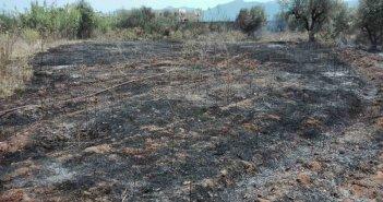 Άμεση επέμβαση της Π.Υ. Αγρινίου για φωτιά σε λιοστάσι στο Παναιτώλιο (ΔΕΙΤΕ ΦΩΤΟ)
