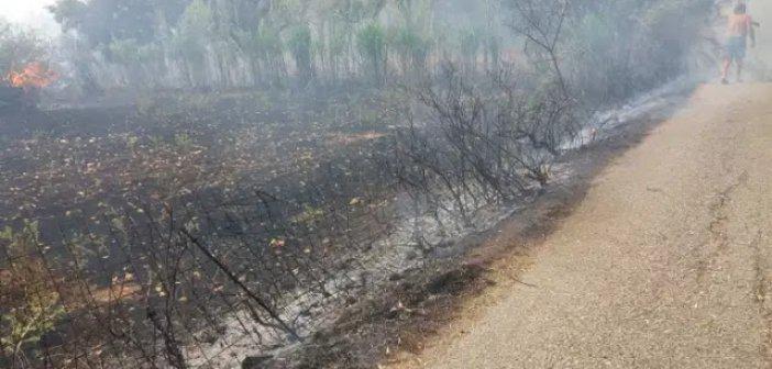 Κανδήλα: Φωτιά σε κατοικημένη περιοχή (ΔΕΙΤΕ ΦΩΤΟ)