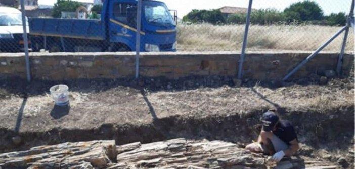 Βρέθηκε γιγαντιαίο απολίθωμα δέντρου στη Λήμνο (ΦΩΤΟ)