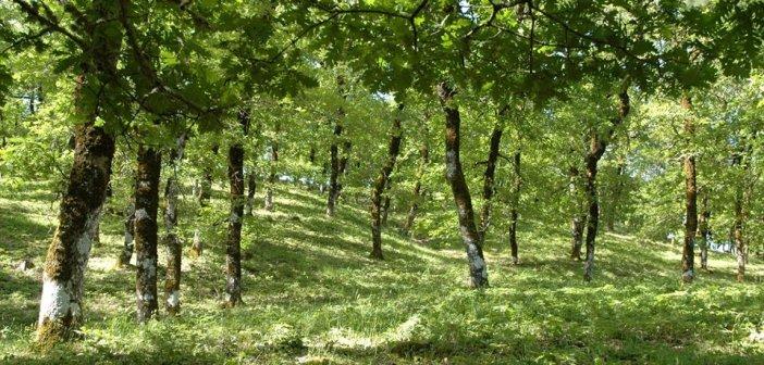 Εικόνες από τον καταπράσινο Αράκυνθο