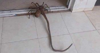 Αράχνη με… εξωγήινη εμφάνιση εντοπίστηκε στα Τρίκαλα (ΦΩΤΟ)