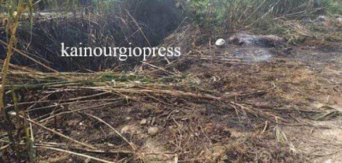 Καινούργιο: Φωτιά σε καλάμια κινητοποίησε την Πυροσβεστική (ΦΩΤΟ)