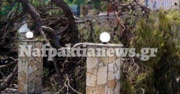 Γαβρολίμνη: Έσπασε μεγάλο κλαδί από το πεύκο στην πλατεία – Άμεση παρέμβαση (ΔΕΙΤΕ ΦΩΤΟ)
