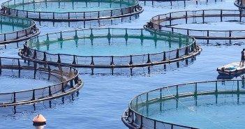 Έκλεβε ψάρια από ιχθυοκαλλιέργεια στον Αμβρακικό